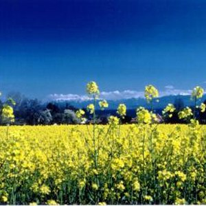 Biocarburanti immagini