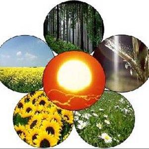 Biomassa immagini