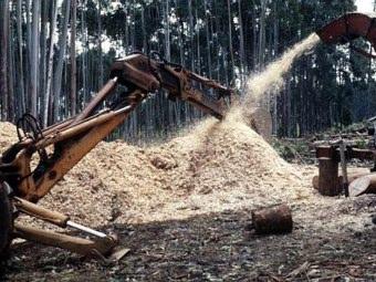 Biomassa vegetale