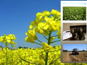 Combustibili da biomasse